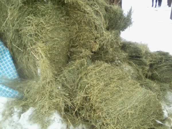 finished clip of hay ready for feeder