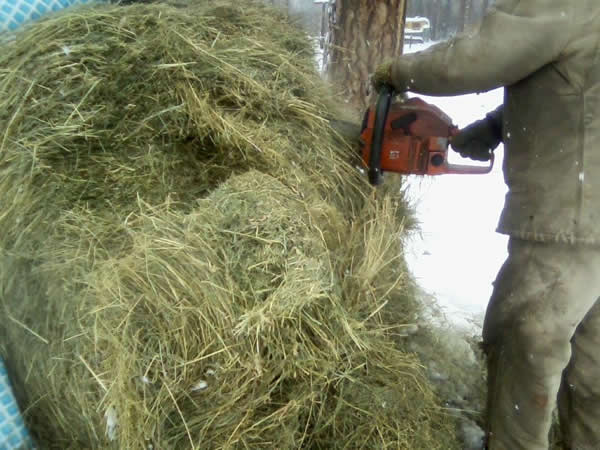Cutting Round Hay Bale With Saw